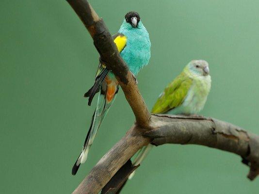 Jurong Bird Park Tickets in Singapore - Tour