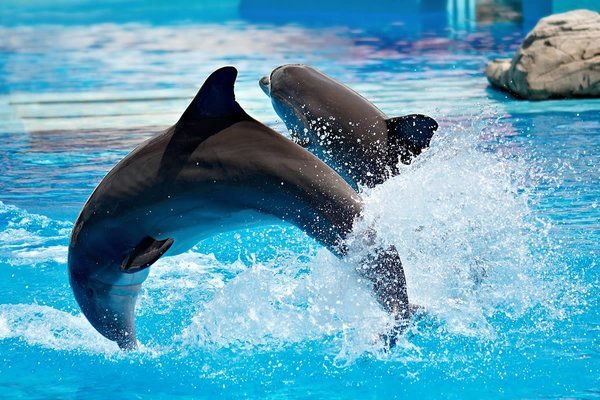 Dolphinarium Show Tickets in Dubai - Tour