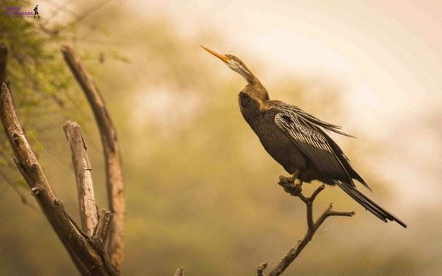 MANGLAJODI BIRDING EXPEDITION - Tour