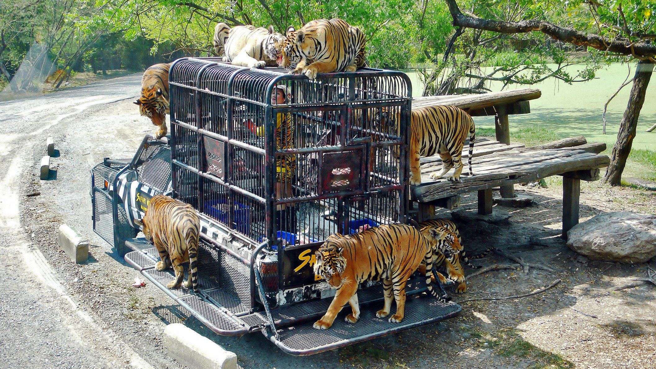 「Safari World」的圖片搜尋結果