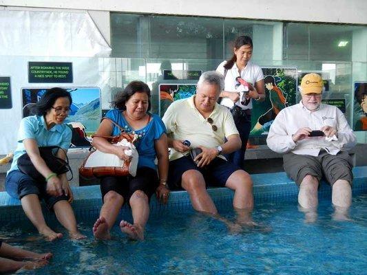 Manila Ocean Park, Sightseeing in Manila - Tour