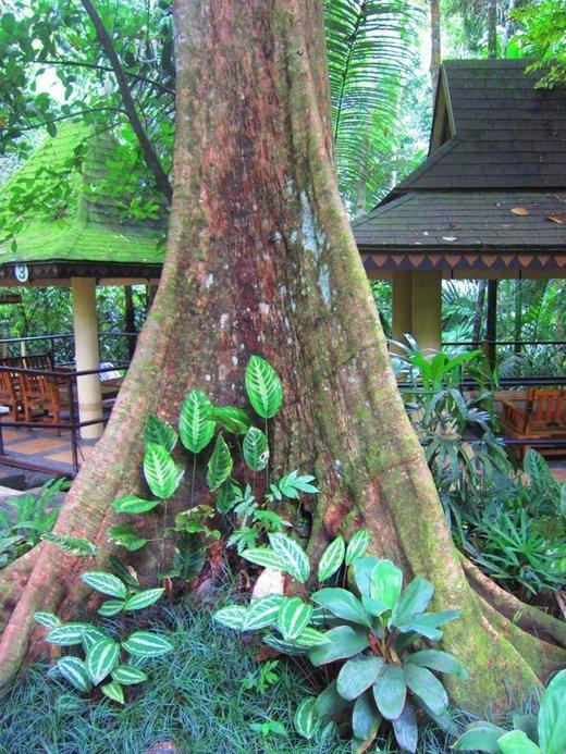 Hidden Valley Springs, Sighteeing in Manila - Tour