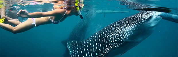 Whale Shark + Sumilon Sandbar, Sightseeing in Cebu - Tour