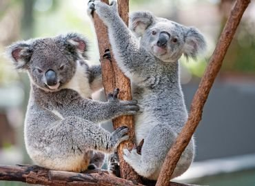 Featherdale Wildlife Park Tickets in Sydney - Tour