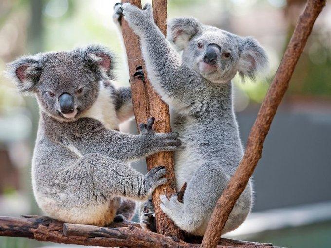 Featherdale Wildlife Park Tickets in Sydney - Tour