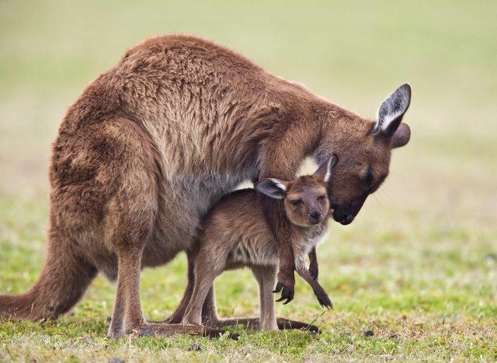Wild Life Sydney Zoo Tickets in Sydney - Tour