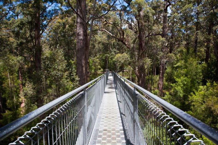 Otway Fly Treetop Walk Tickets in Melbourne - Tour
