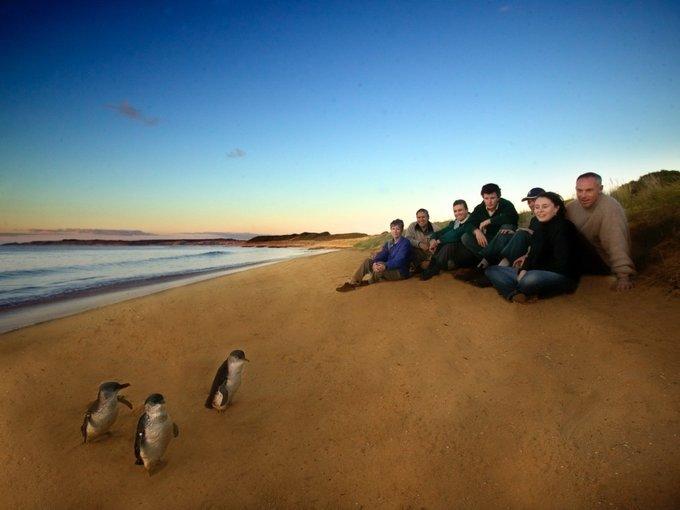 Phillip Island Penguin Parade Tickets in Melbourne - Tour