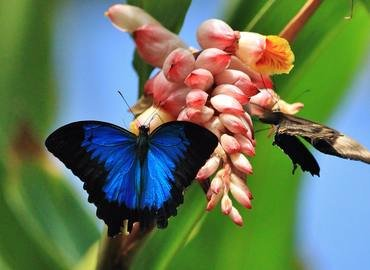 Australian Butterfly Sanctuary Tickets in Cairns - Tour