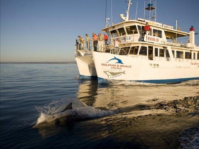 Dolphin Watch Cruise Tickets in Sydney - Tour