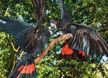 Bird World Kuranda Tickets in Cairns - Tour