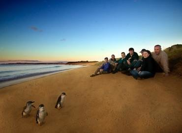 Phillip Island Penguin Kangaroo Koala Tour, Sightseeing in Melbourne - Tour