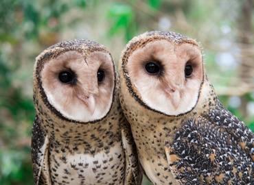 Currumbin Wildlife Sanctuary Tour, Sightseeing in Gold Coast - Tour