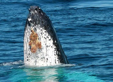 Whale in Paradise Tour, Sightseeing in Gold Coast - Tour