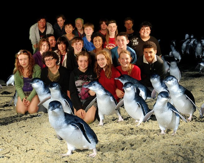 Penguins Up late Tour, Sightseeing in Melbourne - Tour