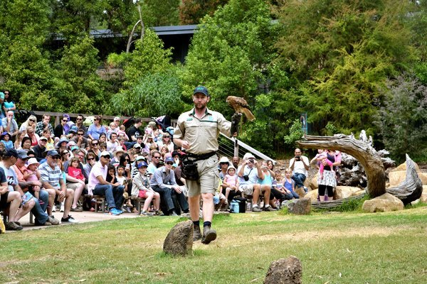 Puffing Billy and Healesville Wildlife Tour, Sightseeing in Melbourne - Tour