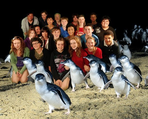 Penguin Parade Tour, Sightseeing in Melbourne - Tour