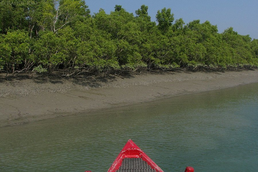 Sunderbans - The Land of the Swimming Swamp Tigers! - Tour