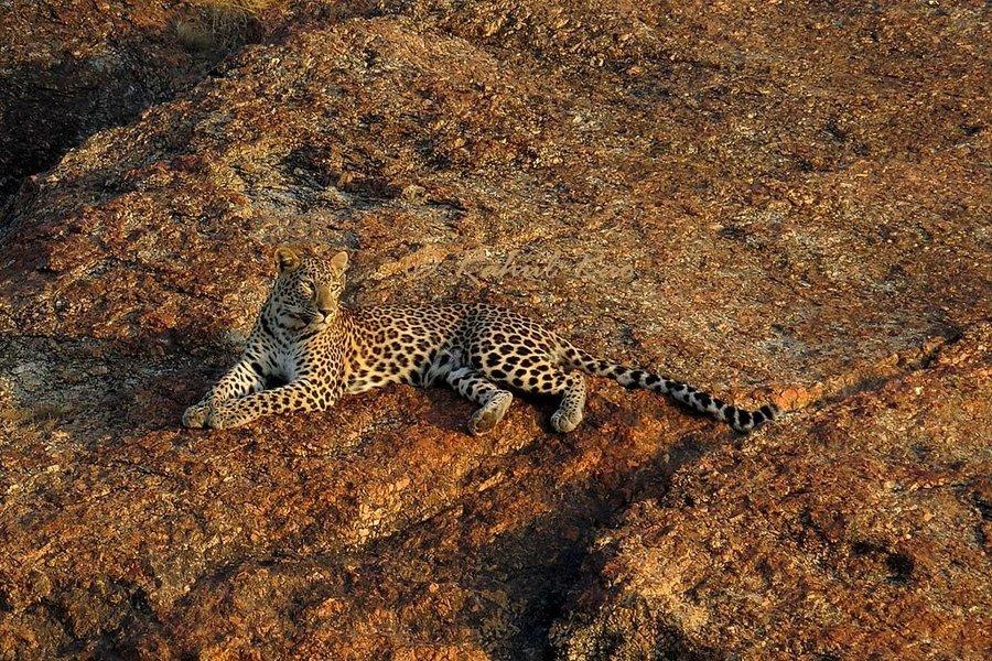 Bera - Leopards of Jawai - Tour