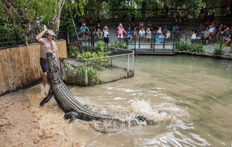 Hartleys Crocodile Tour, Sightseeing in Cairns - Tour