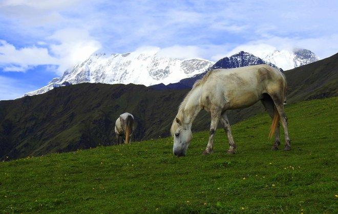 Himalayan Treks in Himachal Pradesh - Collection