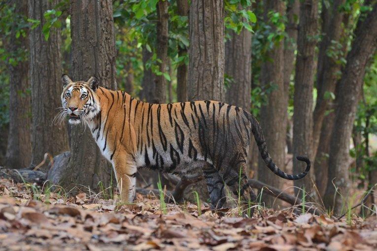 Bandhavgarh National Park - Tour