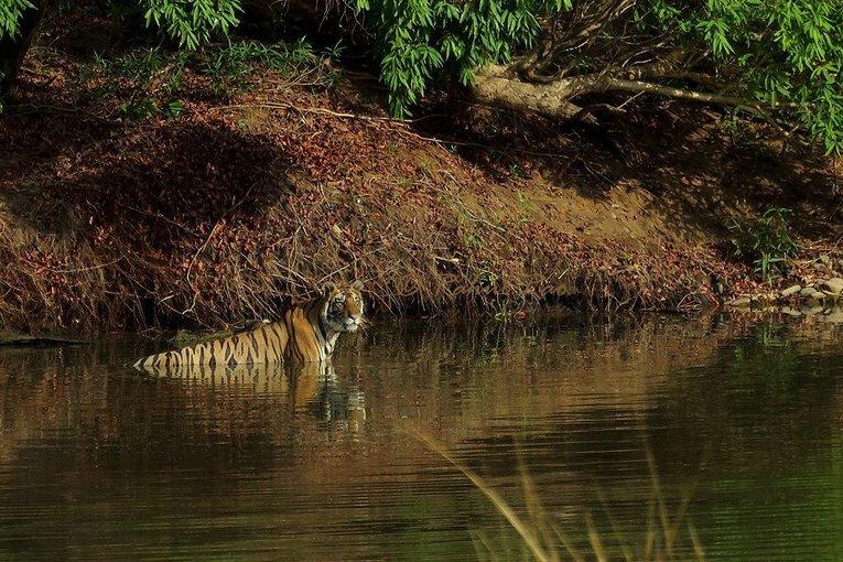 Panna National Park - Tour