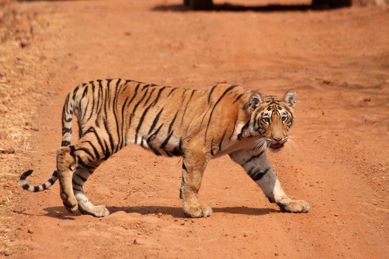 Tadoba Andhari Tiger Reserve - Tour