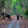 001_corbett_elephants_foliage_outdoors