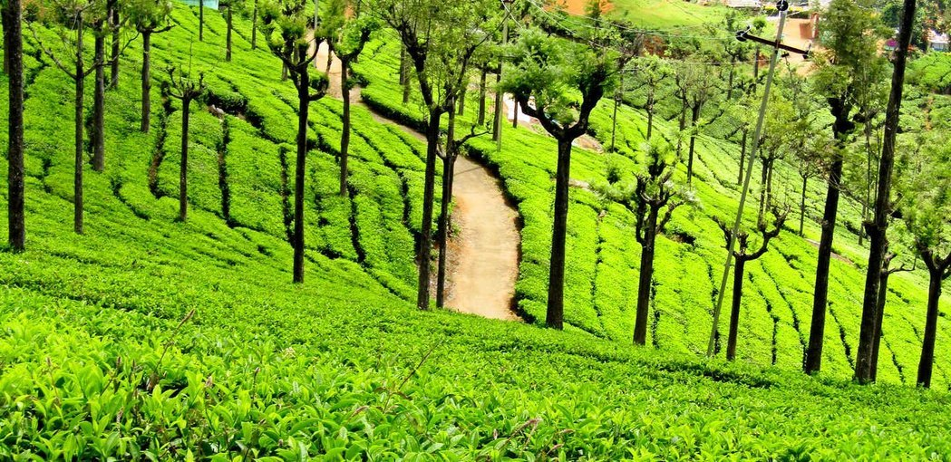 Long weekend Trip to Ooty - Tour