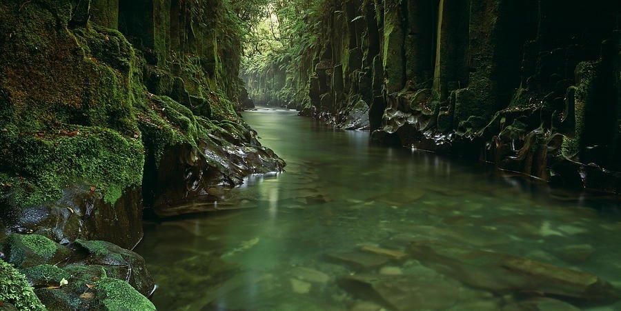 Full Day Whirinaki Walk Tour, Sightseeing in Rotorua - Tour