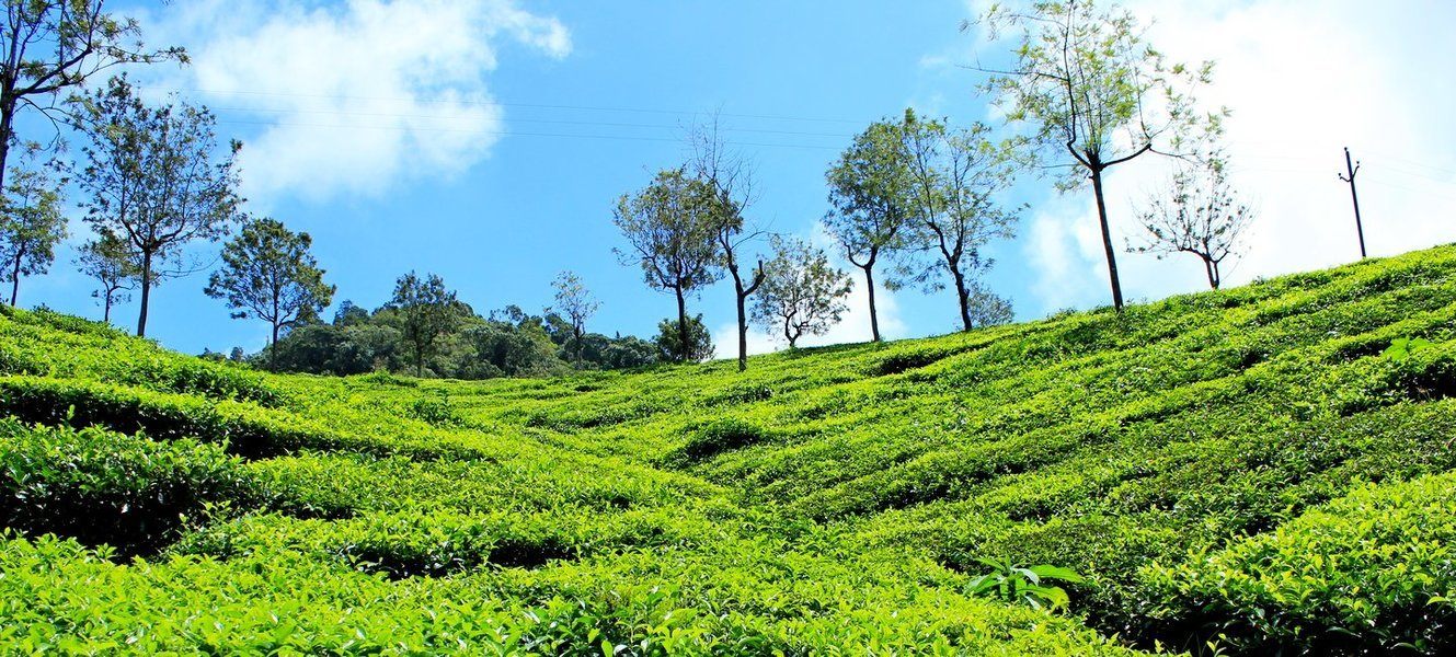Trek to Gray Hill, Coonoor - Ooty - Tour