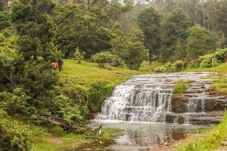 Trek to Canopy Hills, Vattakanal - Tour