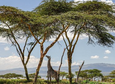 Kenya Safari 9 Nights 10 Days - Tour