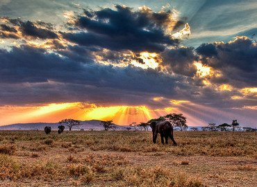 Kenya Safari 11 Nights 12 Days - Tour