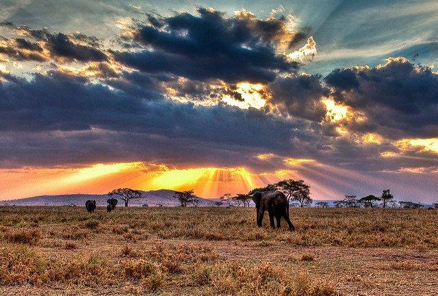 Kenya Safari 11 Nights 12 Days - Tour