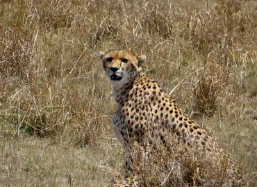 Kenya Safari 4 Nights 5 Days (Option II) - Tour