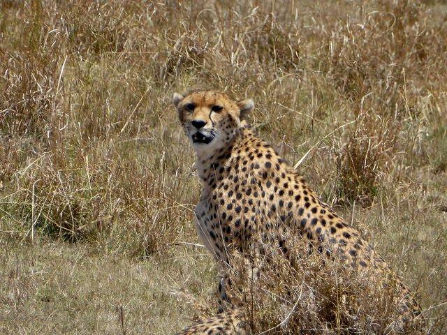 Kenya Safari 4 Nights 5 Days (Option II) - Tour
