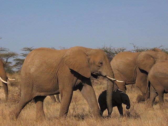 Kenya Safari 6 Nights 7 Days (Option I) - Tour