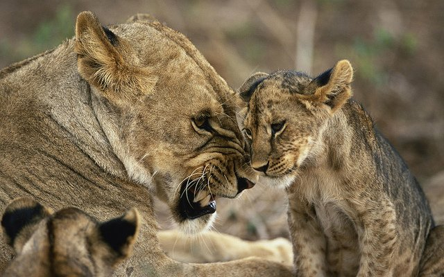 Kenya Safari 8 Nights 9 Days - Tour