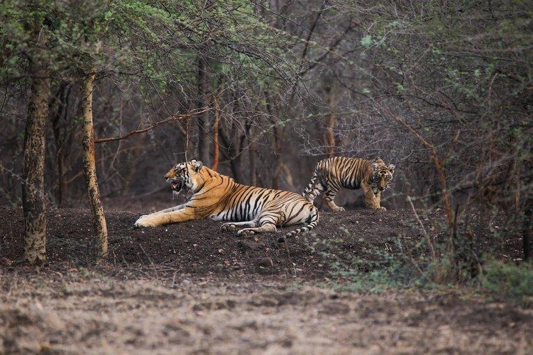 Ranthambhore National Park - Tour
