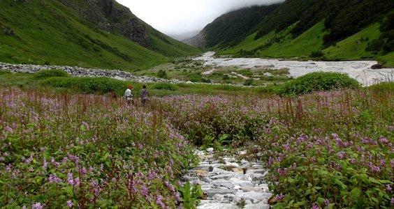 Valley of Flowers Trek (Ex Dehradun)