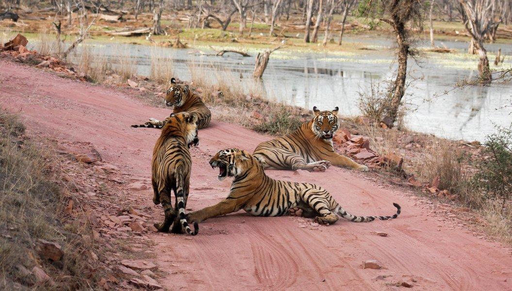 Ranthambhore National Park (Train) - Tour
