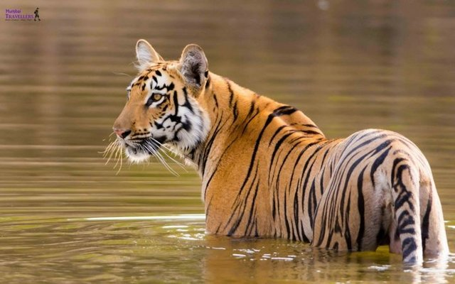 TIPESHWAR WILDLIFE SANCTUARY TOUR - Tour