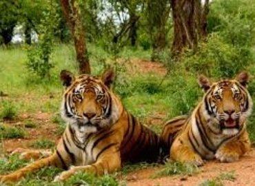 Majestic Uttarakhand - Tour