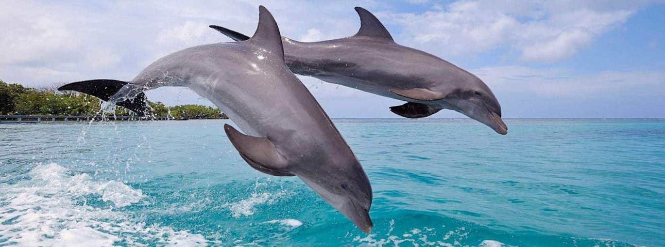 Dolphin Spotting in Goa - Tour