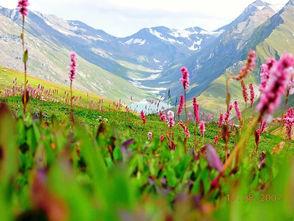 Valley of flowers - Tour