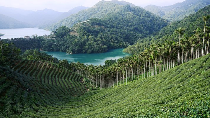 Thousand Island Lake & Pinglin Tea Plantation, Sightseeing in Taiwan - Tour