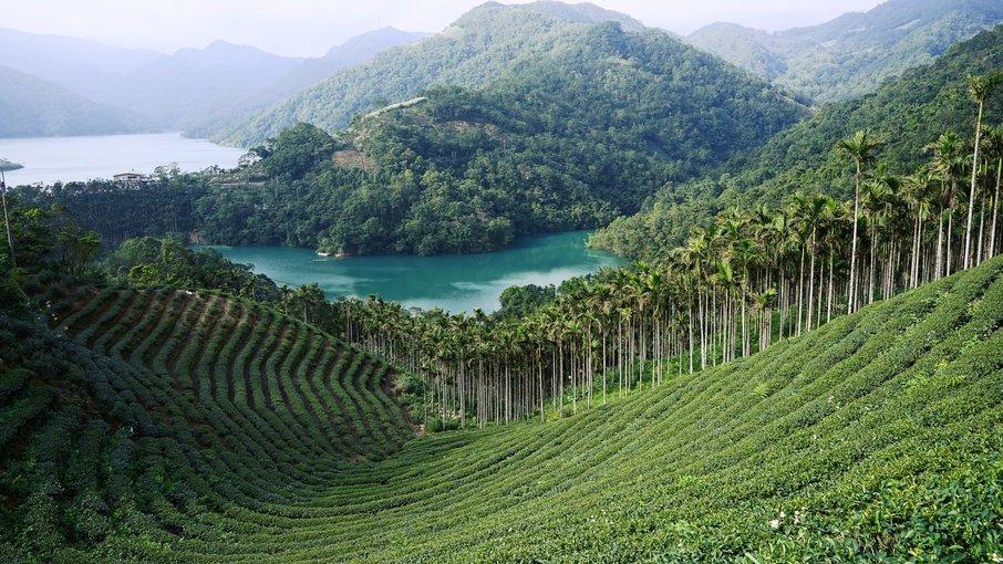 Thousand Island Lake & Pinglin Tea Plantation, Sightseeing in Taiwan - Tour