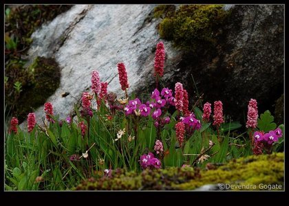 Valley of Flowers Trek (Ex Delhi)